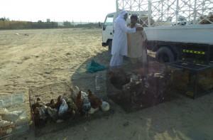 élevage traditions spécialités