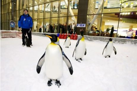 pingouin ski dubai